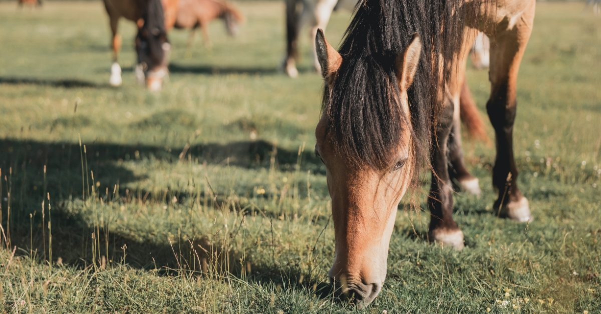 Horses eating grass on rural property in East Texas.
