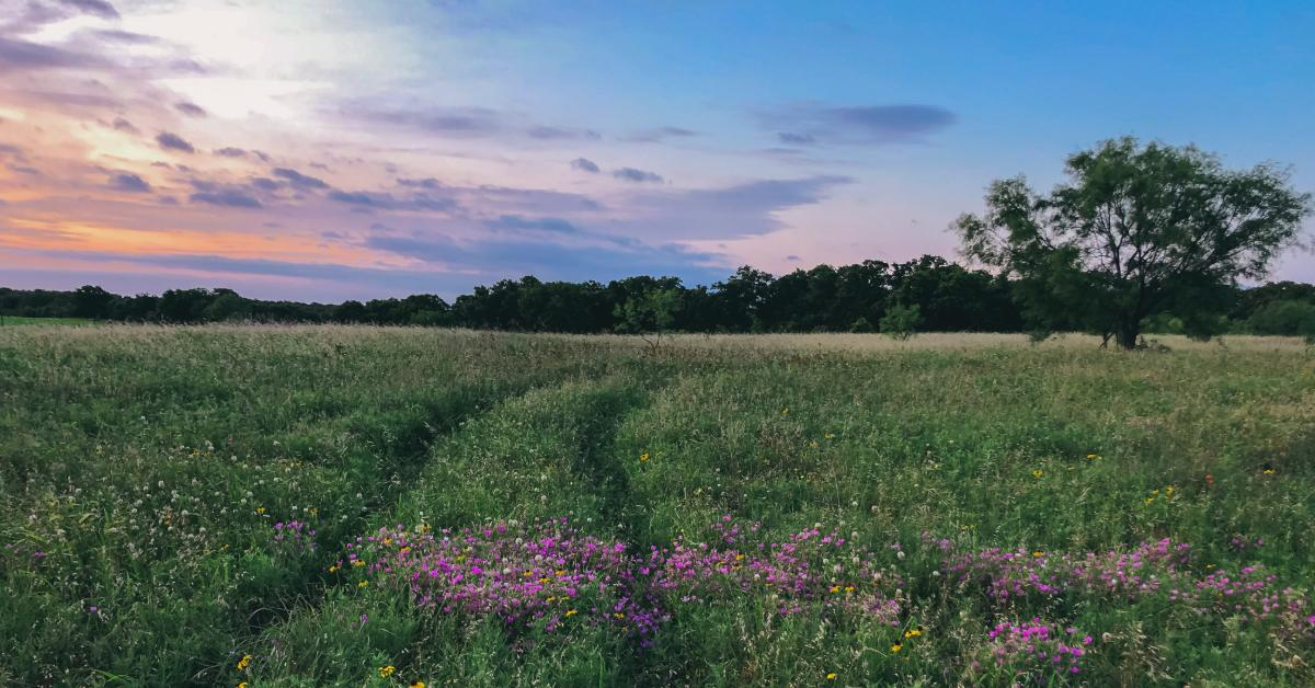 Rural property in East Texas, with flowers in the foreground and trees in the background.