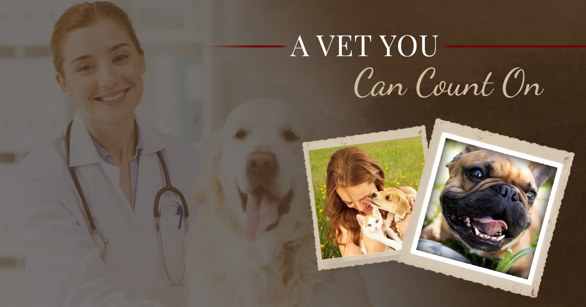 Best Vet Near Me: See What Sets Valley Center Veterinary