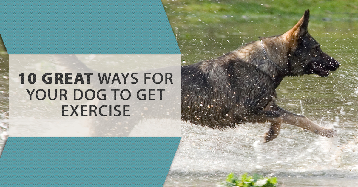 If Thereu0027s One Thing Your Veterinarian Never Stops Telling You, Itu0027s That  Your Dog Needs His/her Exercise! We All Love Our Dogs And Want Whatu0027s Best  For ...