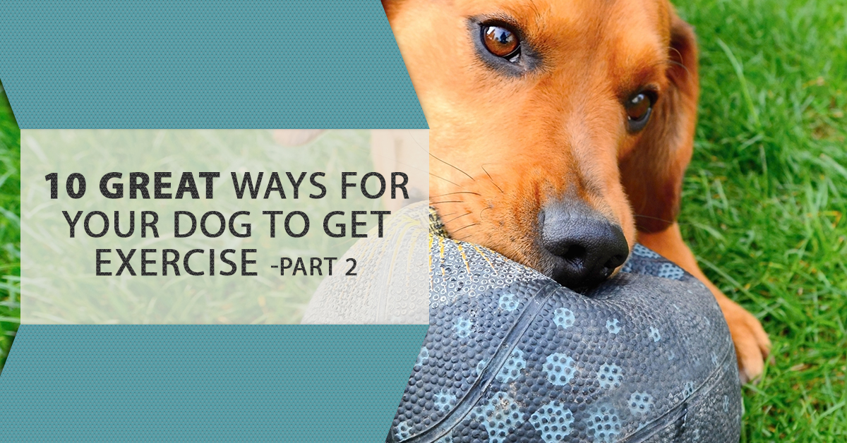 Hello, And Welcome Back To Our Blog Here At VetCare Pet Clinic. This Is  Part Two Of Our Blog Series On Exercising Your Dog. Last Time, We Talked  About ...