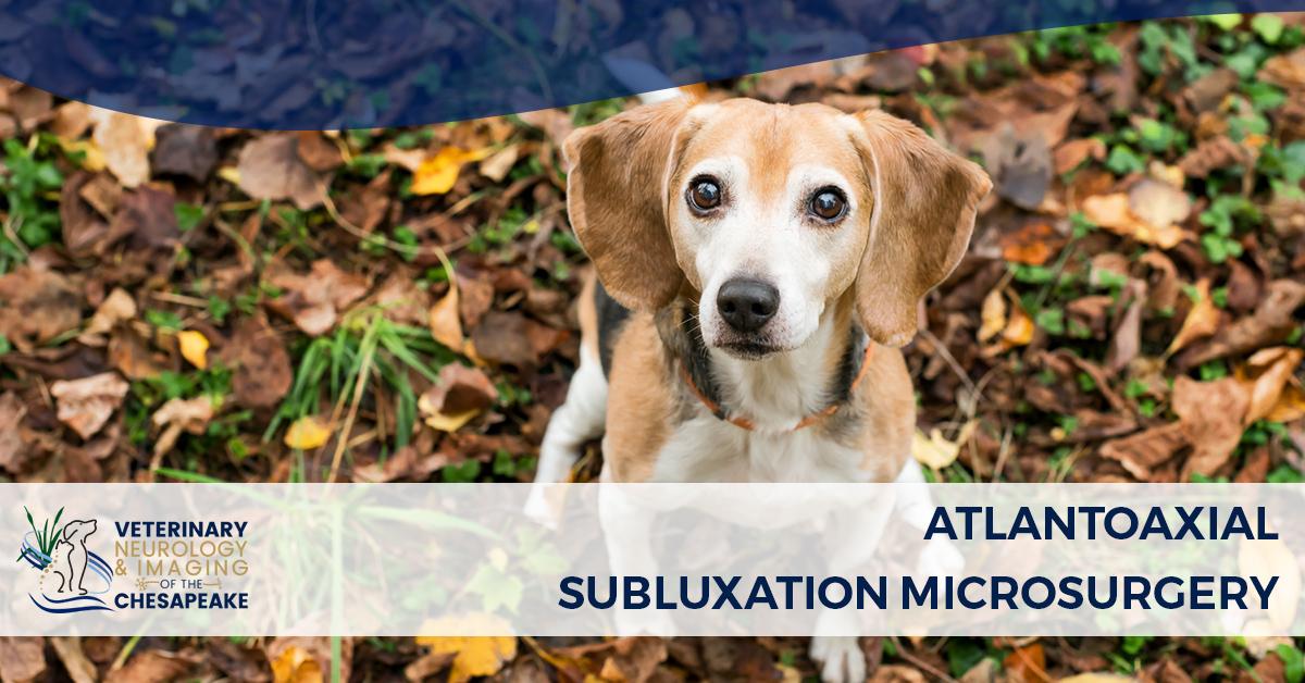 Atlantoaxial Subluxation Microsurgery | Veterinary Neurology