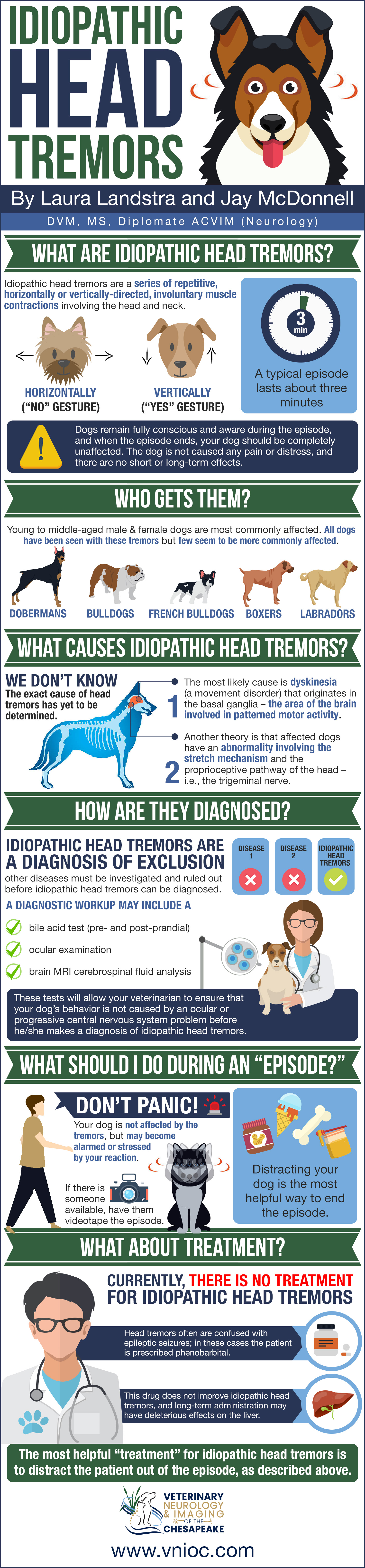 Idiopathic Head Tremors in Dogs Infographic | Veterinary
