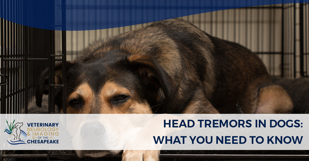 Veterinary Neurologist in Annapolis MD: Head Tremors in Dogs