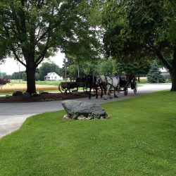 Say yes to a horse drawn carriage getting you to and fro when you visit Canada at The Vineyard Suite.