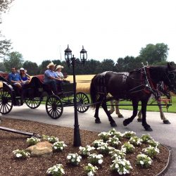 Enjoy the view when you sit back and relax on a horse drawn carriage at The Vineyard Suite.