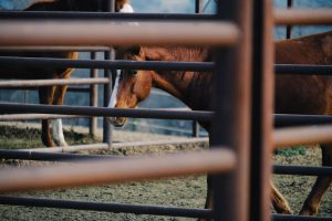 keep your ranch animals secure with the installation of advanced ranch security systems