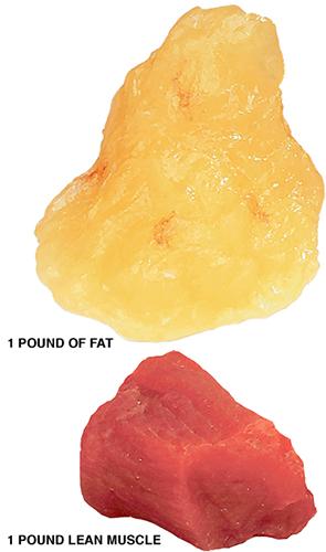 Lost Fat Pic