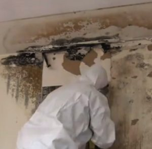 Mold Remediation Charleston AR