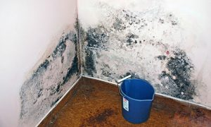 Mold Removal Charleston AR