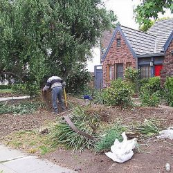 Image of worker removing materials from lawn