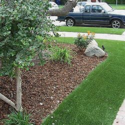 Image showing turf alongside natural landscaping