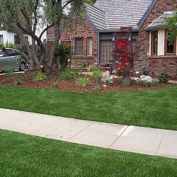 Image of sidewalk dividing waterless turf in front of house