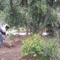 Image of worker raking in preparation for waterless turf