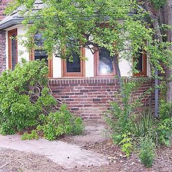 Image of house with scattered plants and messy yard