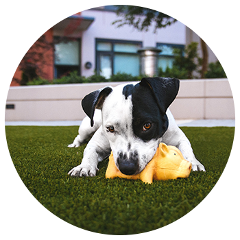 Image of puppy chewing on toy