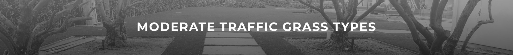 Header Image of Moderate Traffic grass types