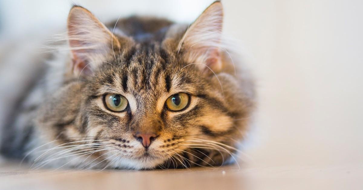 don't flush cat litter webb's select-a-service altonah