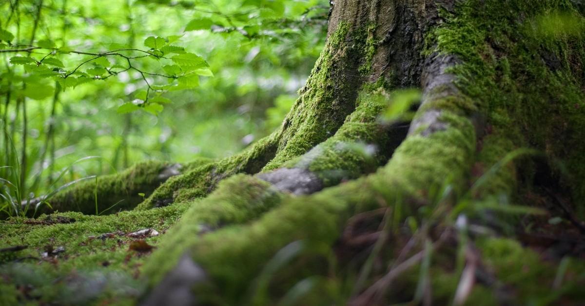 tree roots clogged drain webb's select-a-service altonah