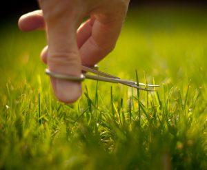 lawn care 2