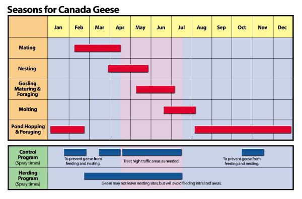 goose_chart