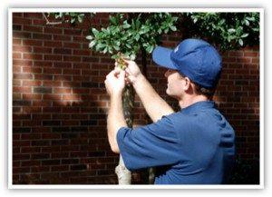 shrubs_1-300x217