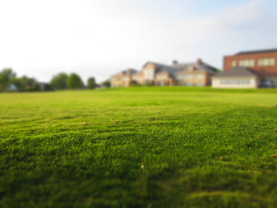 front yard lawn landscaping