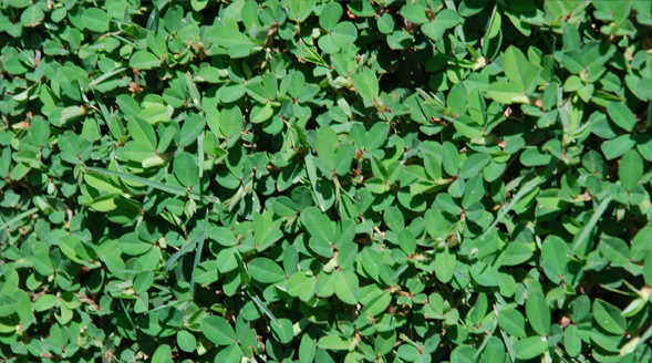 Weed control service alpharetta organic weed control roswell weed control service alpharetta organic weed control roswell weed control johns creek weedpro lawn care mightylinksfo