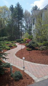 paver with hemlock mulch