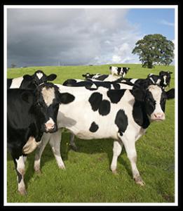farm loans fayetteville