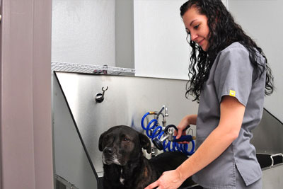 West Ballantyne Animal Hosptial bathing and grooming services.