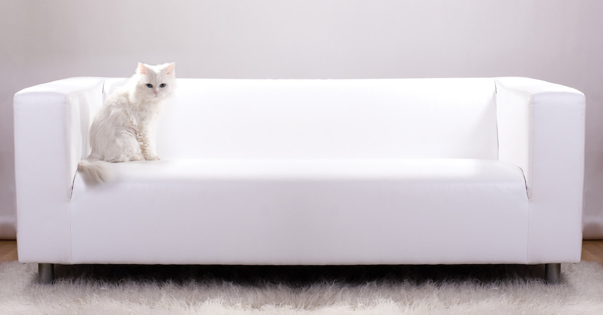 Magnificent Charlotte Cat Care How To Stop Your Cat From Clawing Furniture Home Remodeling Inspirations Cosmcuboardxyz