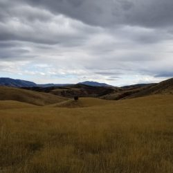 Large Grass Meadow on Utah Mountains