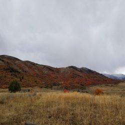 Fall Colors on Hills of Guaranteed Guided Hunting Ground