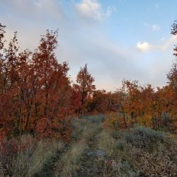 Fall Colors in Forest Meadow at Utah Hunting Ranch