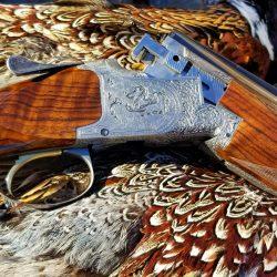 Gun Placed on Top of Trophy Turkey Hunt