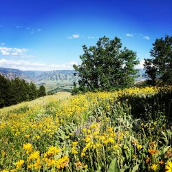 Wildflower Meadow on Bison Hunting Grounds