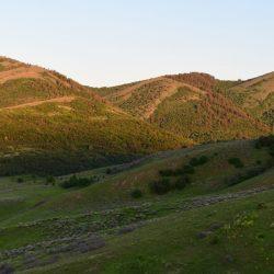 Sunset Light on Utah Grassy Mountain Landscape