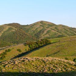 Sunny Morning on Utah Grassy Mountain Elk Hunt