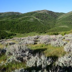 Green Mountain Range Outlook on Guided Bison Hunt
