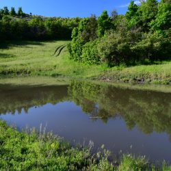 Lake Reflects Forest Meadow Overlook