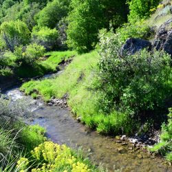 Creek Bed with Fresh Water on Guided on Big Game Hunt