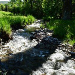 Swift Creek in Grassy Meadow at Guaranteed Hunting Ranch