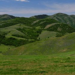 Grassy Green Mountain Landscape on Ranch Grounds