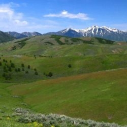 Landscape of Green Grassy Hills and Snowcapped Mountains
