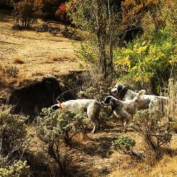 Grouse Hunting in Utah | West Canyon Ranch