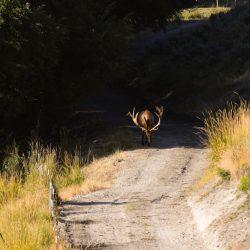 Trophy Elk Hunt at Ranch