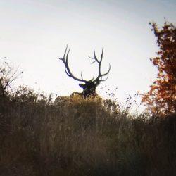 Hunters Tracking Trophy Elk in Utah | West Canyon Ranch