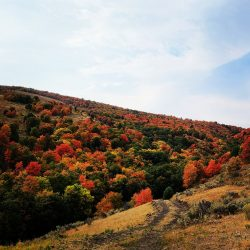 The Beautiful Utah Mountains in Fall | West Canyon Ranch