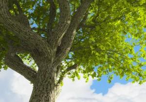 hi_res_tree_test_render_by_fizzoman-d5hc4fh-300x209